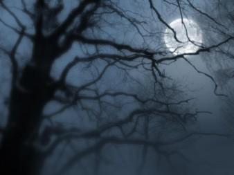 night-moon-fog_30578